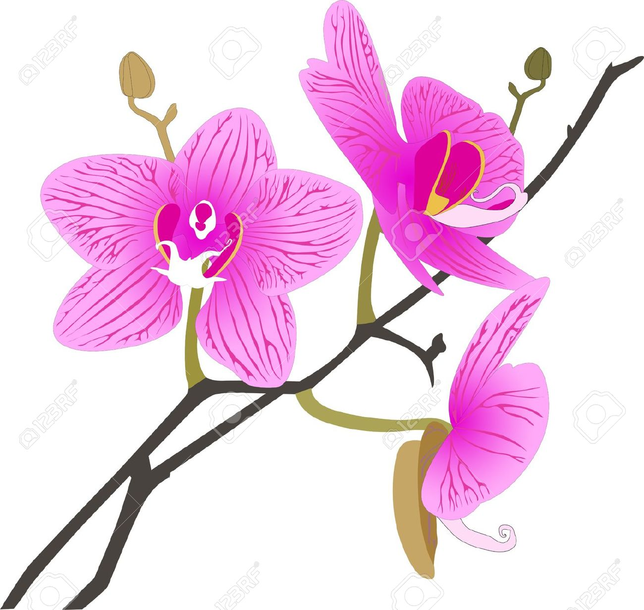Orchid clipart #14, Download drawings
