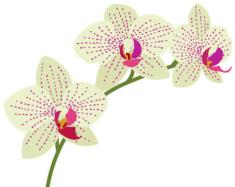 Orchid clipart #10, Download drawings