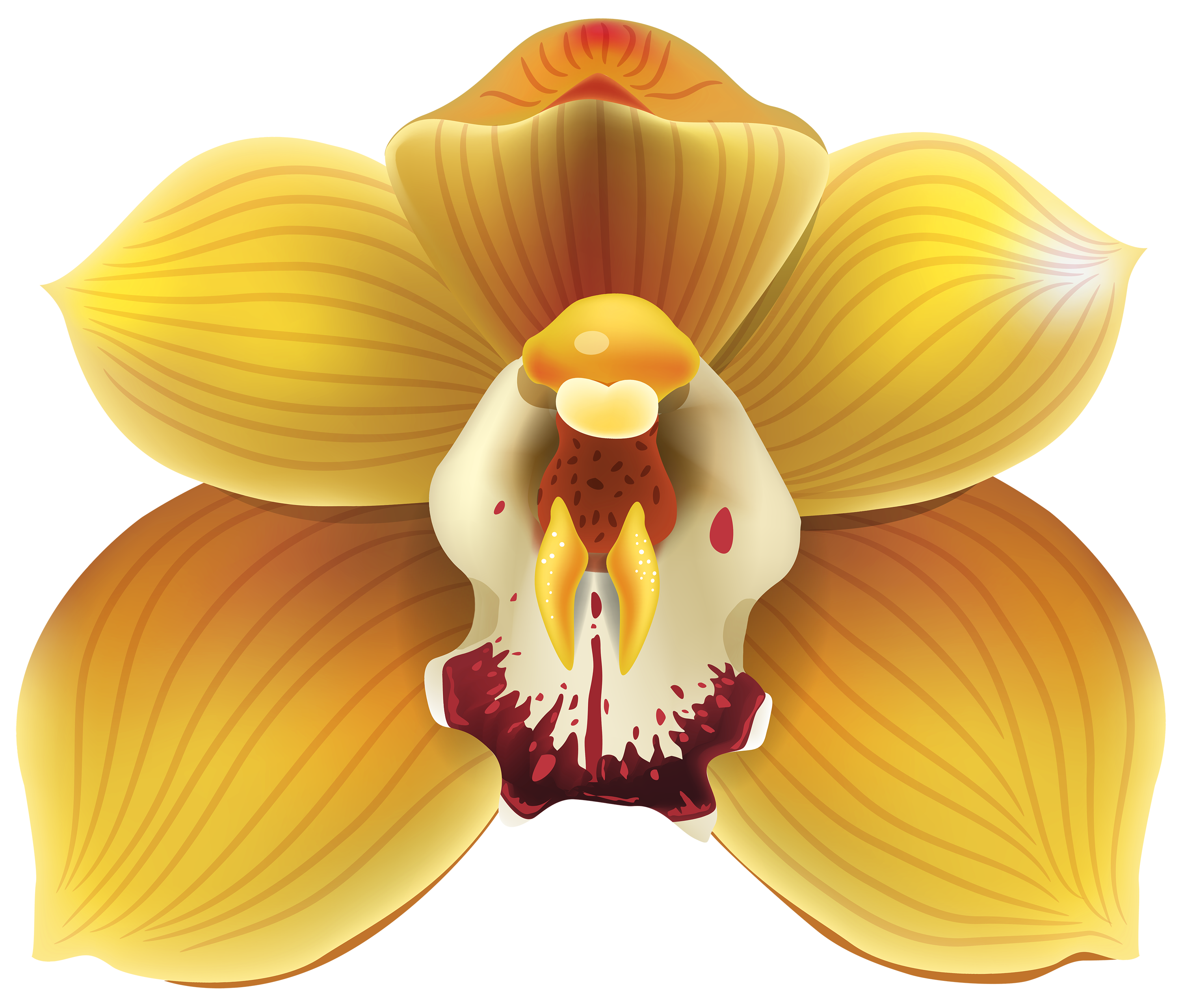 Orchid clipart #1, Download drawings