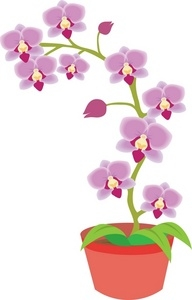 Orchid clipart #5, Download drawings