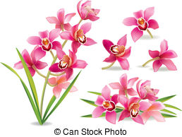 Orchid clipart #13, Download drawings