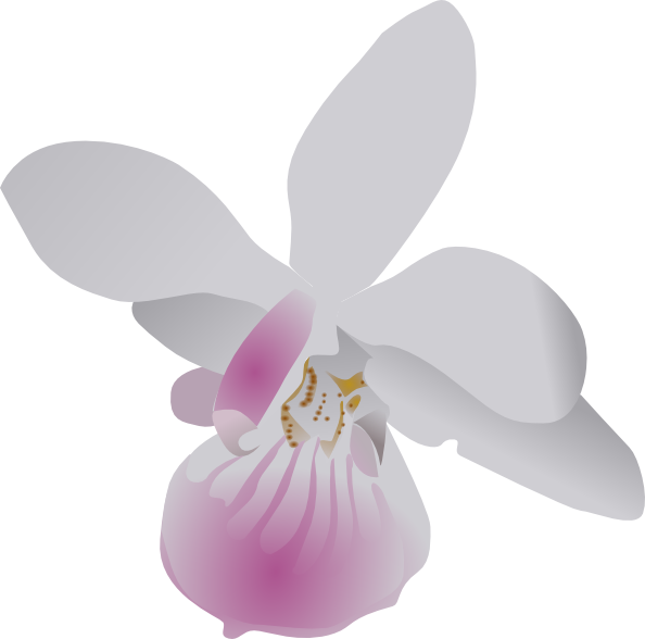 Orchid clipart #11, Download drawings