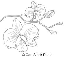 Orchid clipart #12, Download drawings