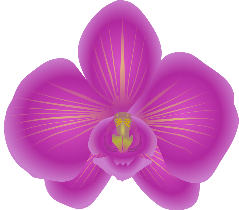 Orchid clipart #16, Download drawings
