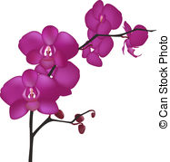 Orchid clipart #20, Download drawings