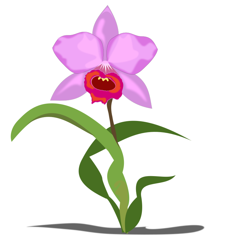 Orchid clipart #19, Download drawings