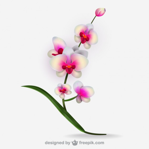 Orchid clipart #6, Download drawings