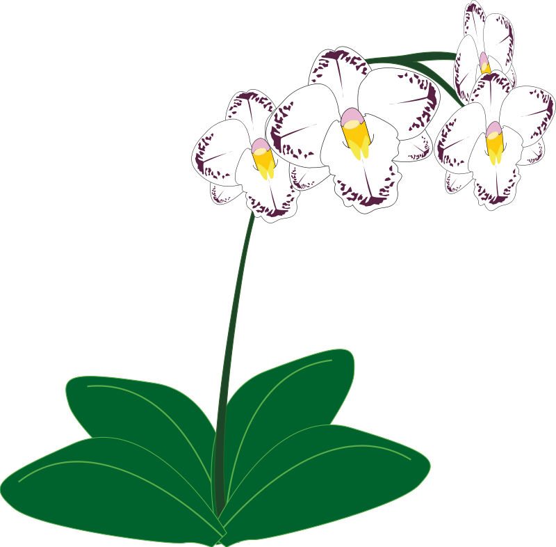 Orchid clipart #18, Download drawings