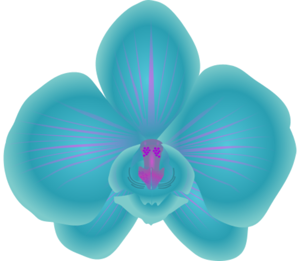 Orchid clipart #2, Download drawings