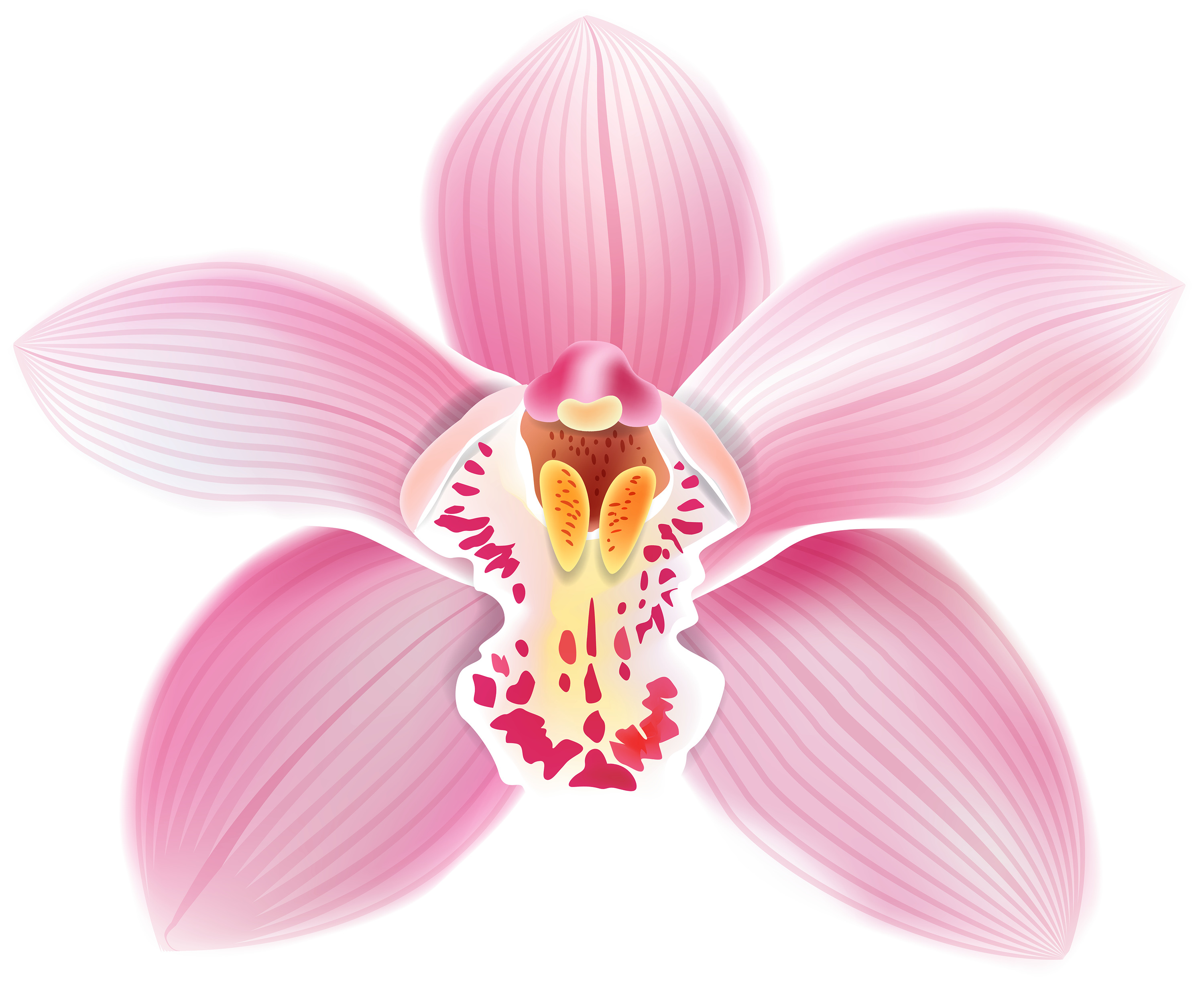 Orchid clipart #4, Download drawings