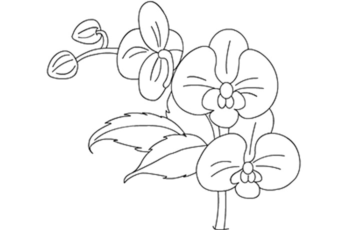 Orchid coloring #9, Download drawings