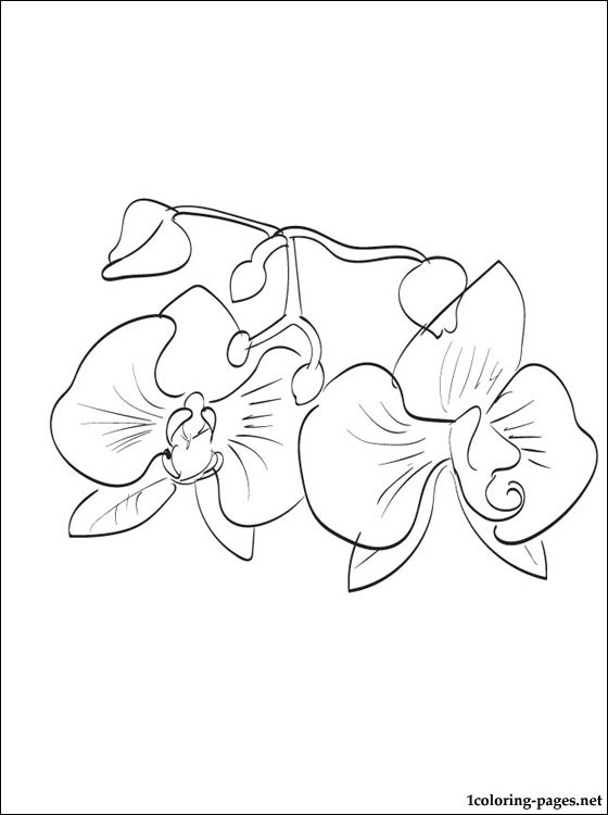 Orchid coloring #3, Download drawings