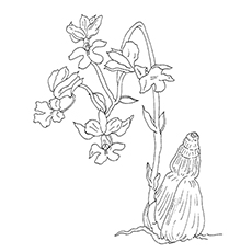 Orchid coloring #4, Download drawings