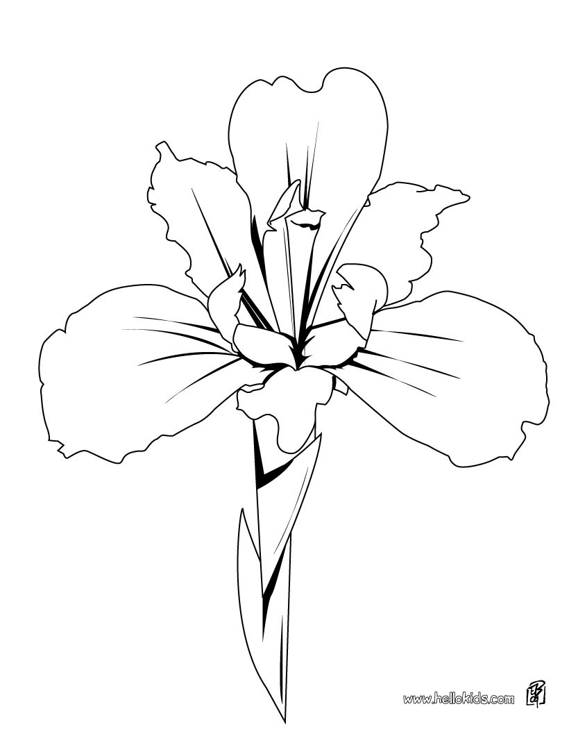 Orchid coloring #6, Download drawings