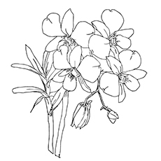 Orchid coloring #1, Download drawings