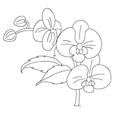 Orchid coloring #11, Download drawings