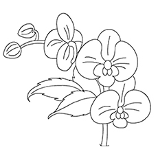 Orchid coloring #2, Download drawings
