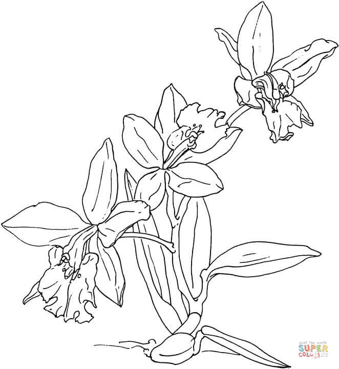 Orchid coloring #16, Download drawings