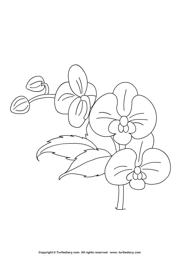 Orchid coloring #19, Download drawings