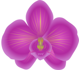 Orchid svg #371, Download drawings