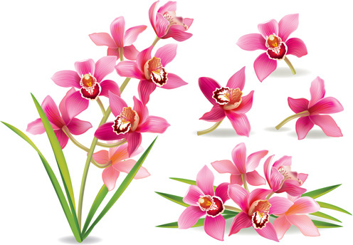 Orchid svg #653, Download drawings