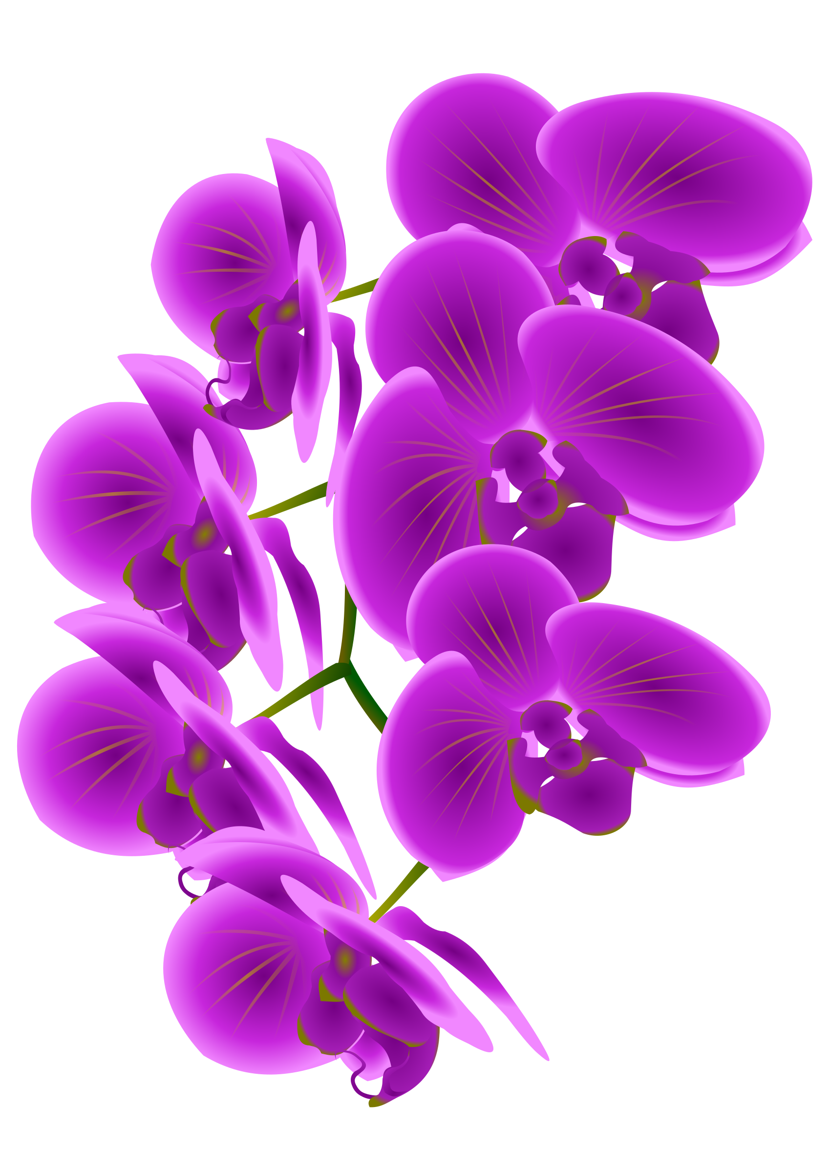 Orchid svg #655, Download drawings