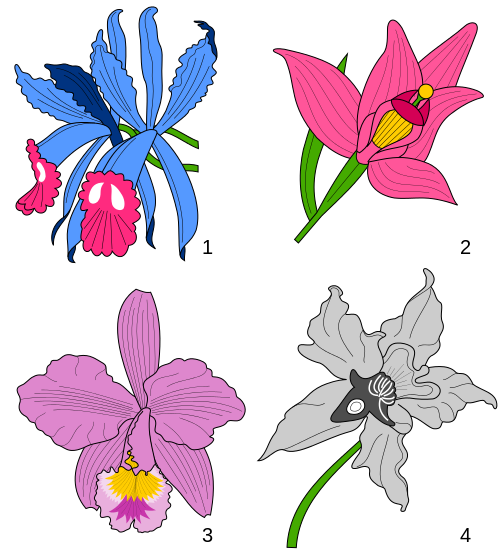 Orchid svg #379, Download drawings