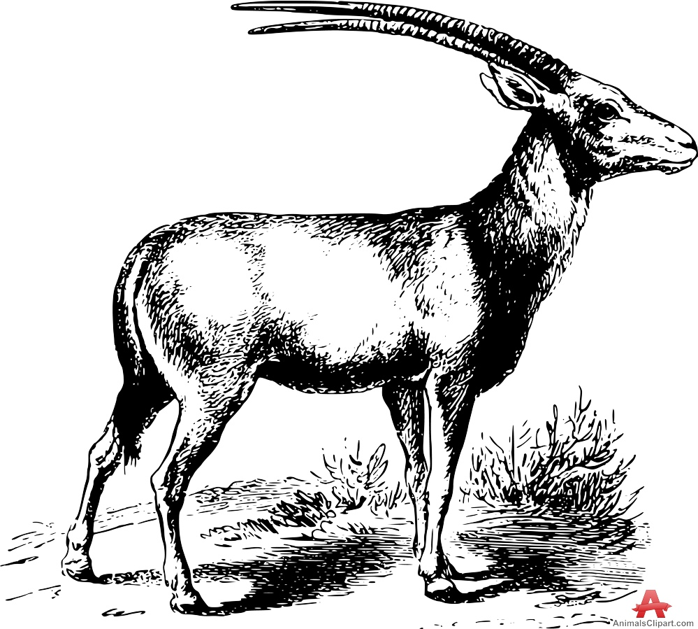 Oryx clipart #6, Download drawings