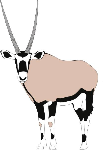 Oryx clipart #10, Download drawings