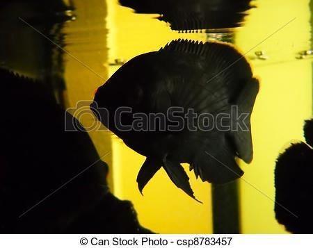 Oscar (Fish) clipart #16, Download drawings
