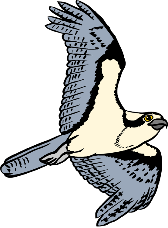 Osprey clipart #2, Download drawings