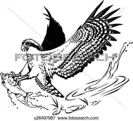 Osprey clipart #14, Download drawings