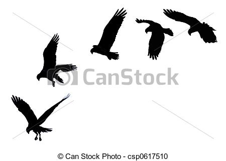 Osprey clipart #1, Download drawings