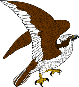 Osprey clipart #4, Download drawings