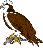 Osprey clipart #3, Download drawings