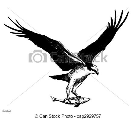 Osprey clipart #17, Download drawings