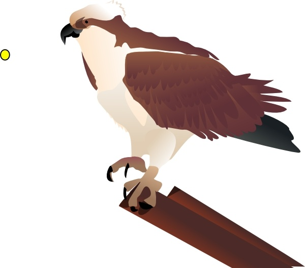 Osprey clipart #20, Download drawings