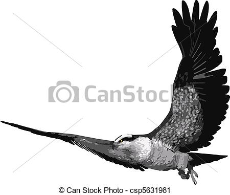 Osprey clipart #16, Download drawings