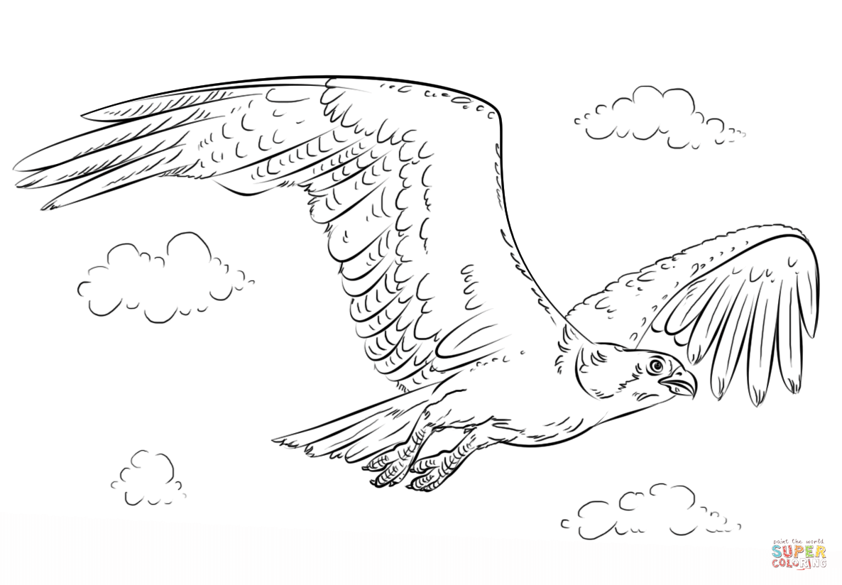 Osprey coloring #10, Download drawings