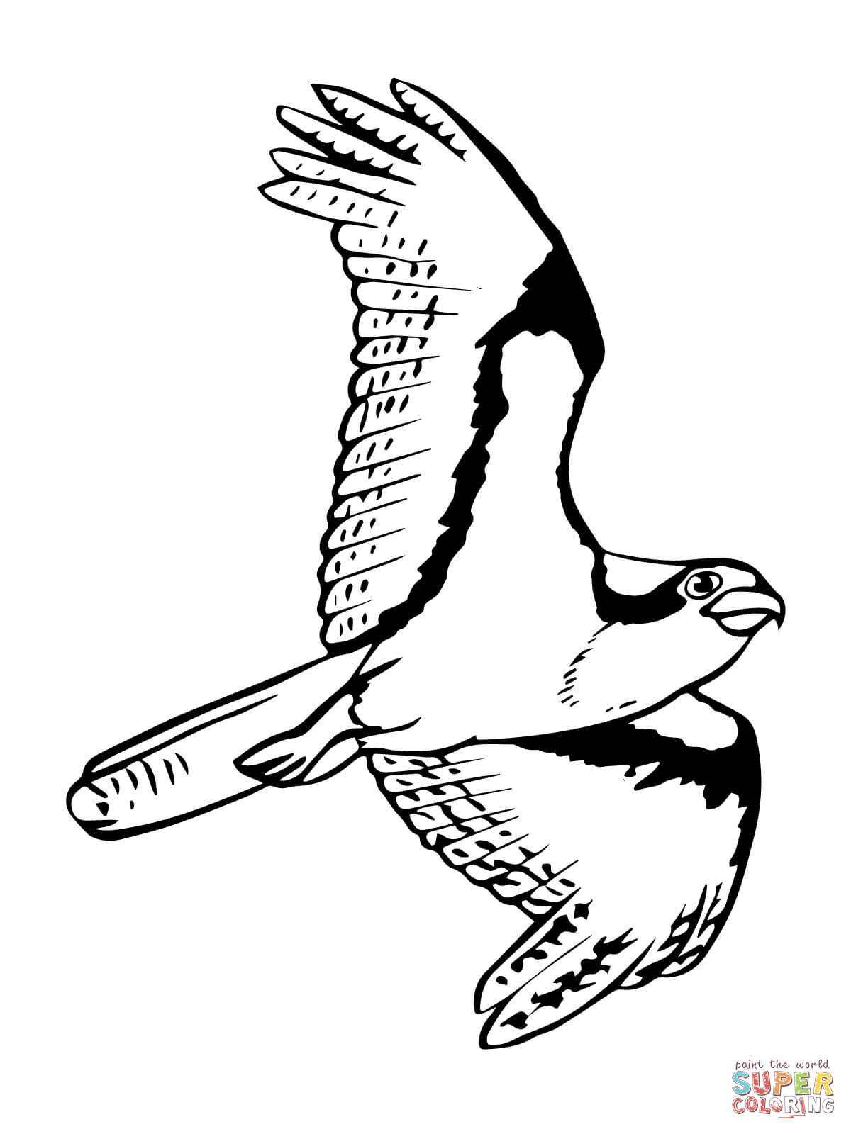 Osprey coloring #11, Download drawings