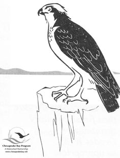 Osprey coloring #6, Download drawings