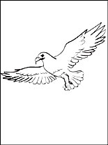 Osprey coloring #2, Download drawings