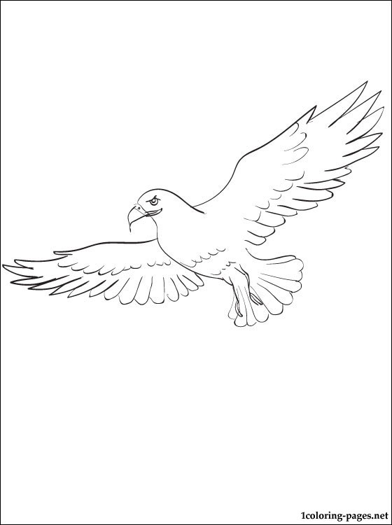 Osprey coloring #7, Download drawings