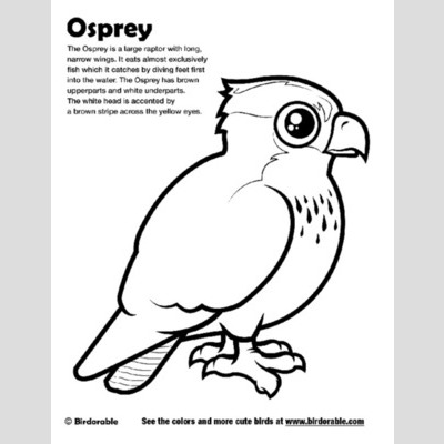 Osprey coloring #19, Download drawings