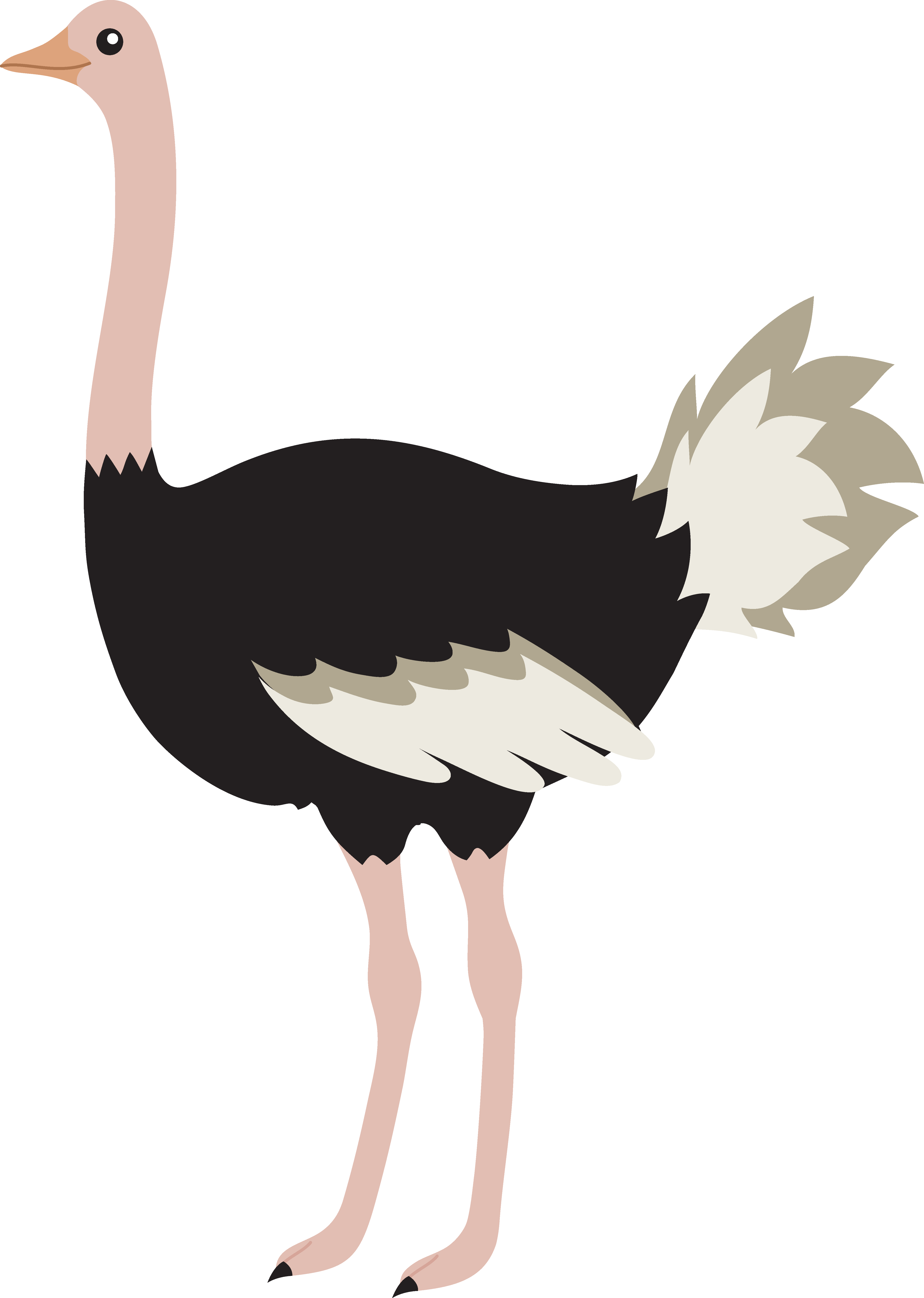 Ostrich clipart #5, Download drawings