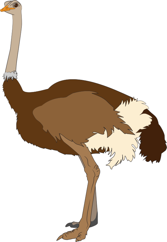 Ostrich clipart #19, Download drawings