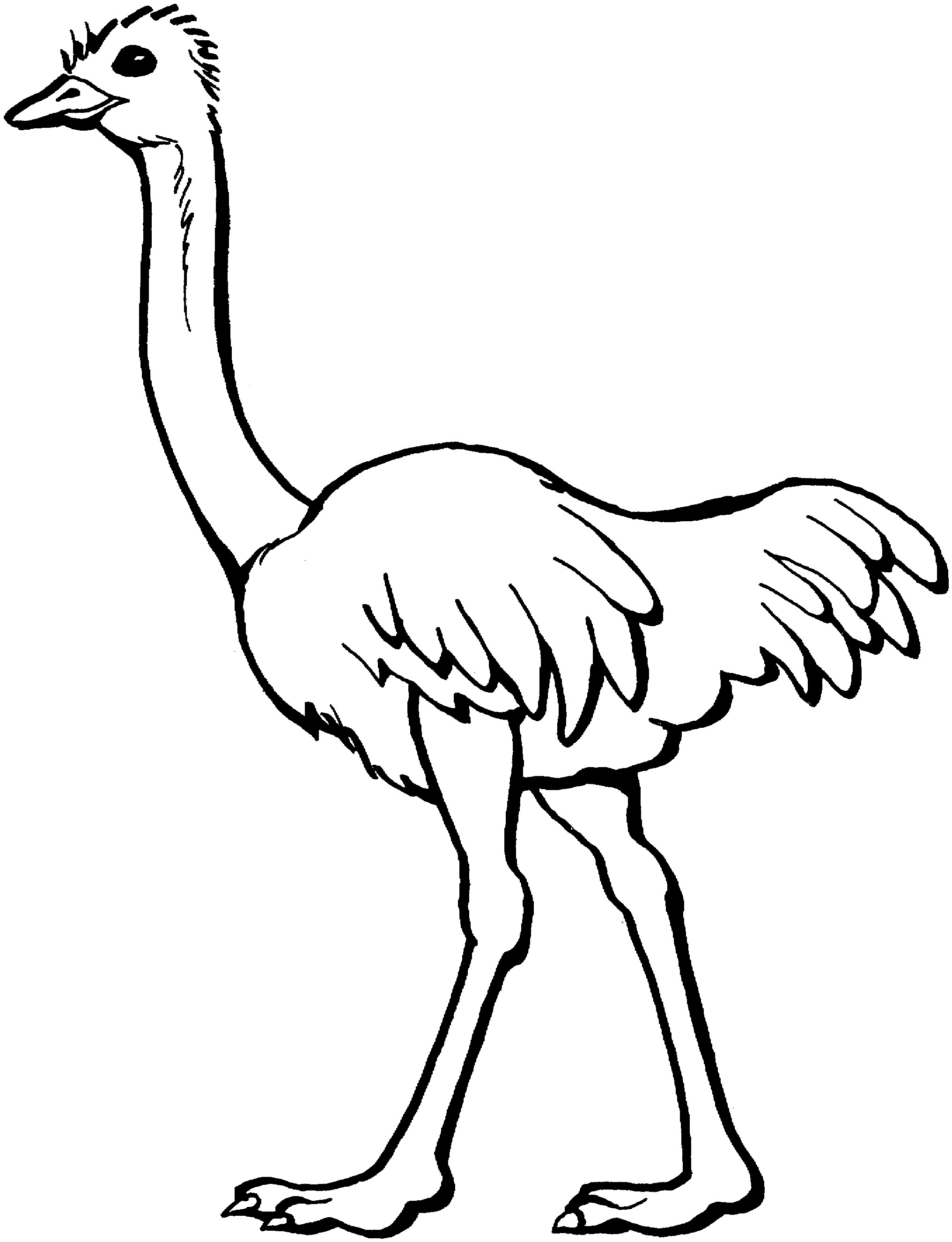 Ostrich coloring #17, Download drawings
