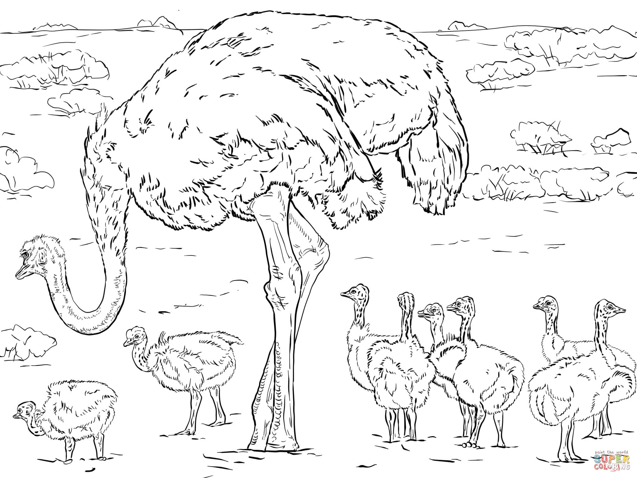 Ostrich coloring #3, Download drawings