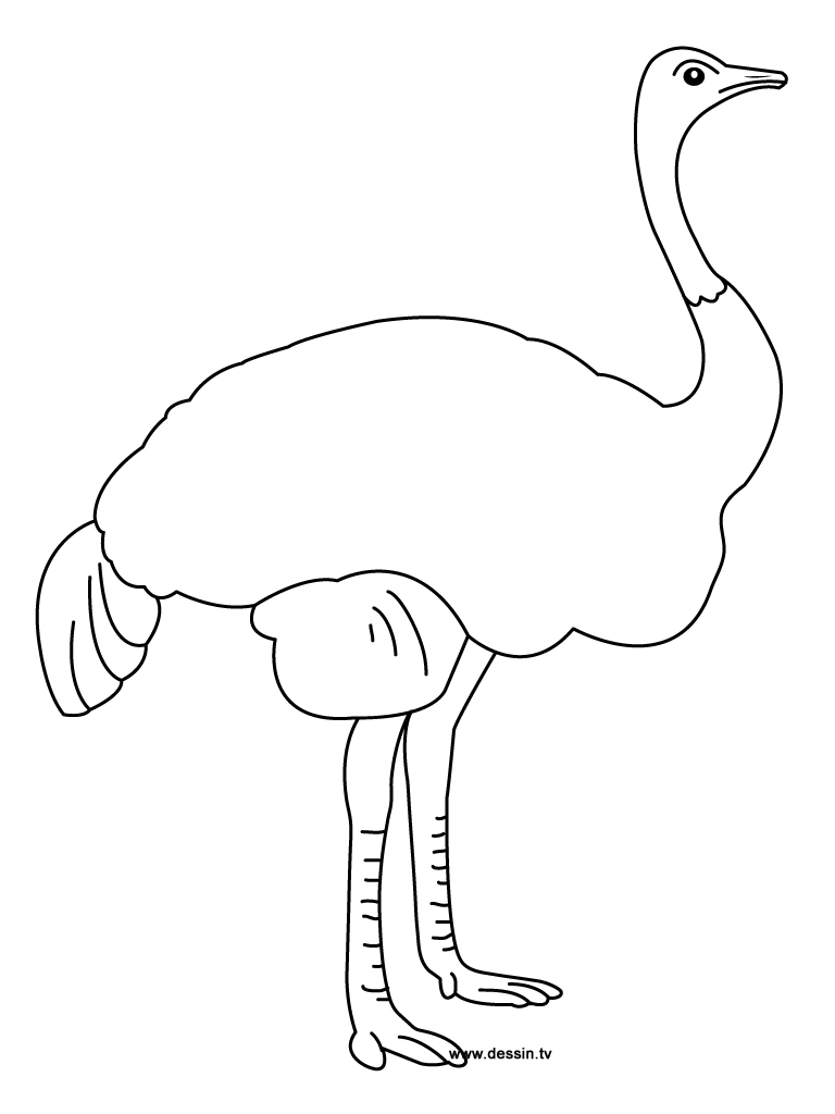 Ostrich coloring #13, Download drawings