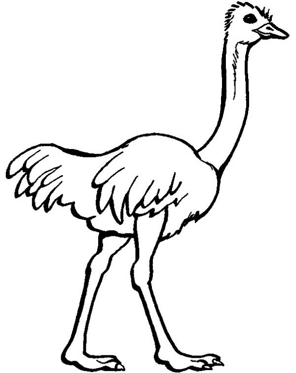 Ostrich coloring #15, Download drawings
